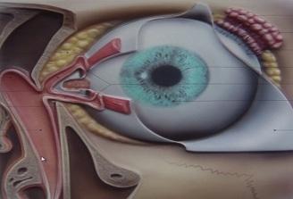 Dr. Mihaela Dragomir: Dacriocistita acuta in randul sugarilor poate afecta structuri precum nervul optic sau muschii oculari