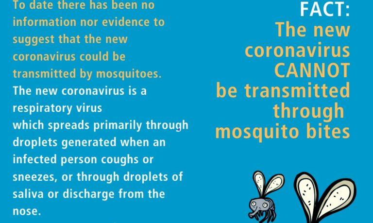 OMS: Coronavirusul nu se transmite prin înțepăturile țânțarilor