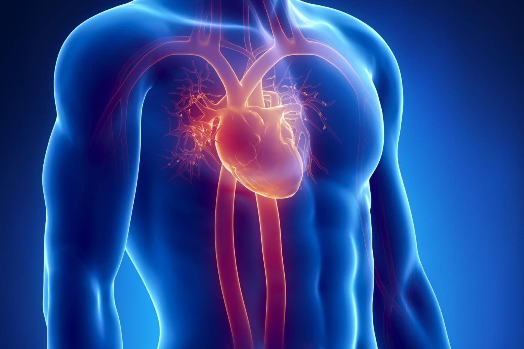 cum vene vene afectează inima