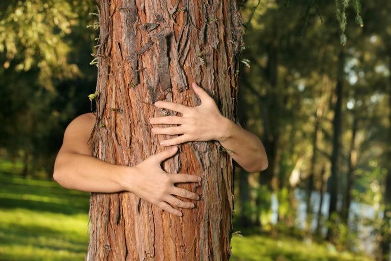 Serviciul forestier din Islanda recomandă îmbrățișarea unui copac ca remediu contra depresiei