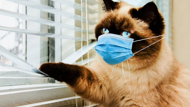 Economia Australiei pierde anual 6 miliarde de dolari din cauza bolilor transmise de pisici
