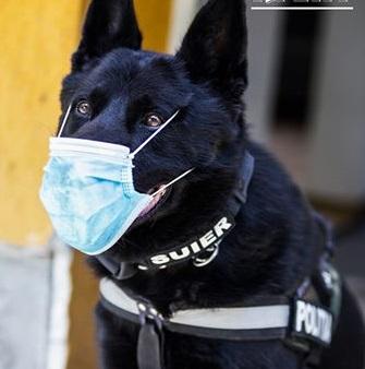 MAI, imagine cu Şuier, câinele polițist, cu mască de protecție