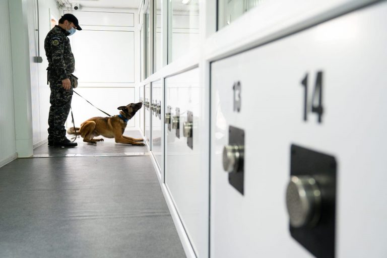 Câini antrenați pentru detectarea persoanelor infectate cu virusul SARS-Cov-2